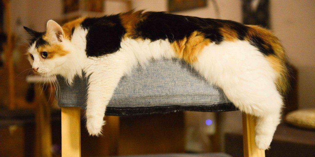 ergonomikus macska