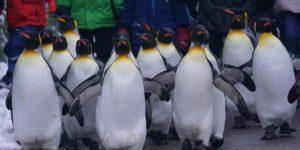 indokolatlan pingvin