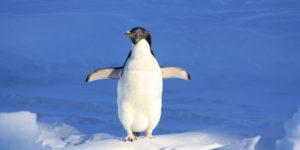 ez egy pingvin, a pingvineket szeretjük