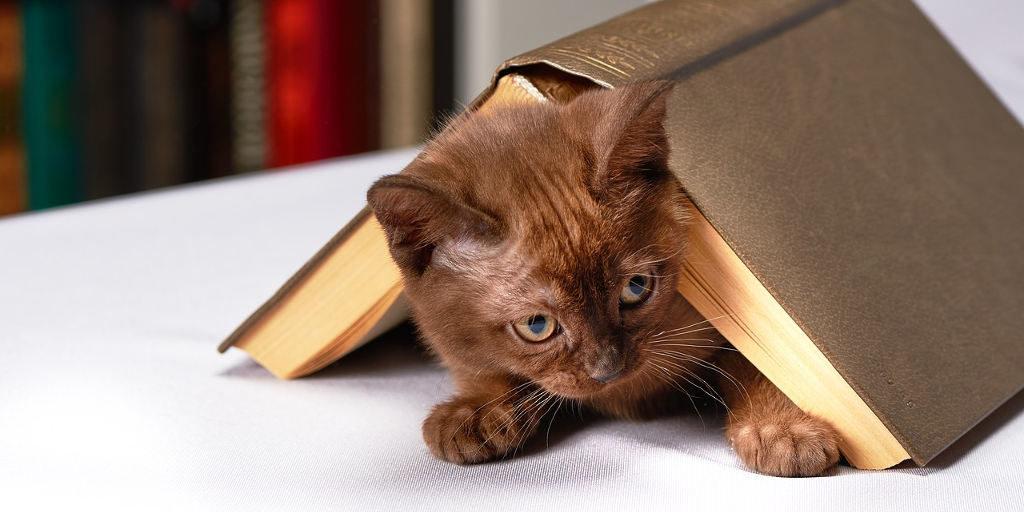 cica egy könyv alatt